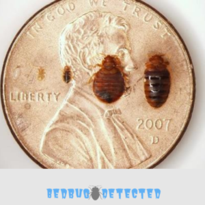 bed bugs compared with coin