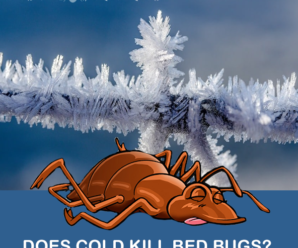 DOES-COLD KILL BED BUGS
