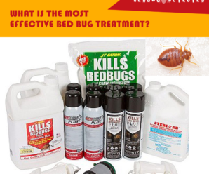 BEST-TREATMENT-FOR-BED-BUGS