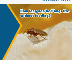 How-long-can-bed-bugs-live