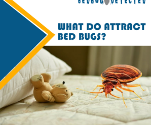 WHAT-DO-ATTRACT-BEDBUGS