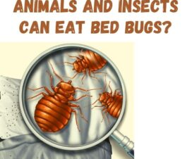 Which Animals And Insects Can Eat Bed Bugs?