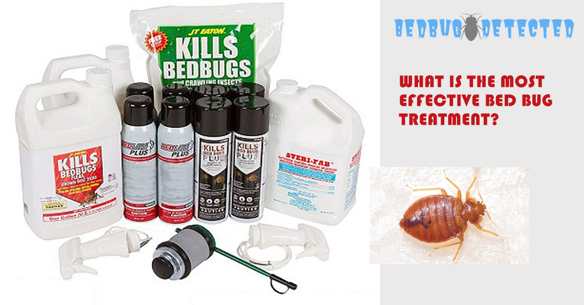most-effective-treatment-for-bed-bugs