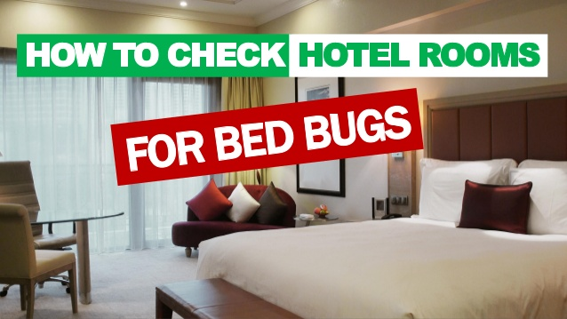bed bug in hotel
