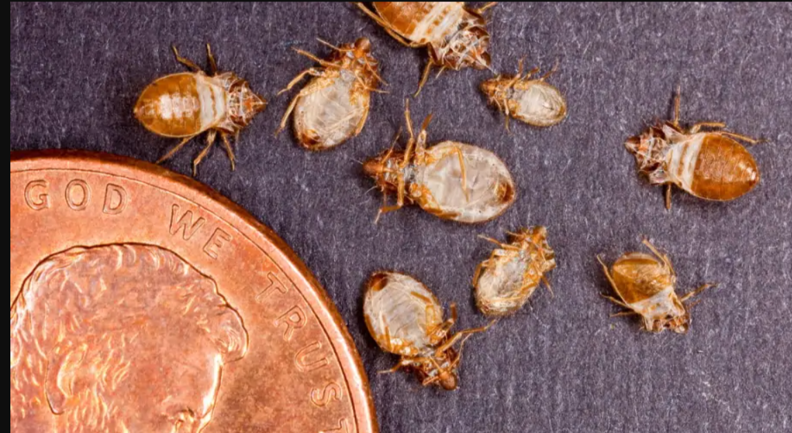How much does it cost to get rid of bed bugs in USA?