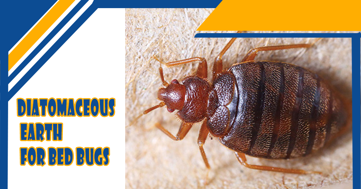 diatomaceous-earth-for-bed-bugs