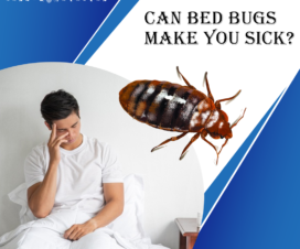 CAN-BED-BUGS-MAKE-YOU-SICK?