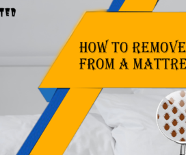 get-rid-of-bed-bugs-in-mattress