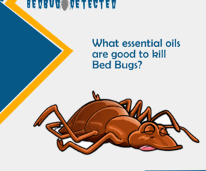 What essential oils are good to kill Bed Bugs?
