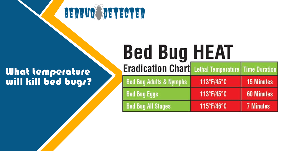 Does Cold Kills Bed Bugs?