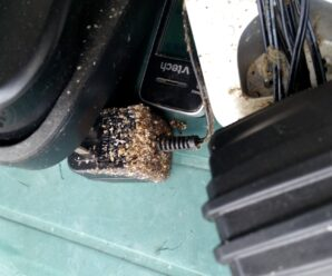 Bed Bugs In Electronics