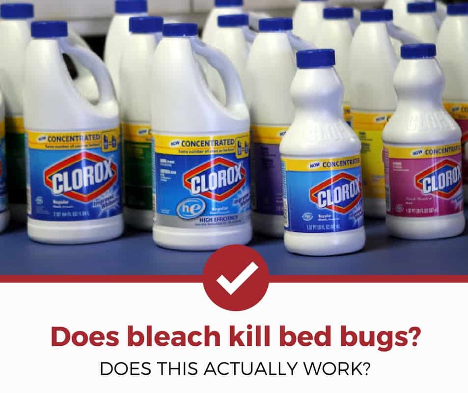Does bleach kill bed bugs instantly