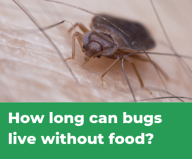 How Long Can Bed Bugs Live Without Food
